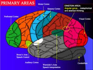 neuropsicologia e riabilitazione